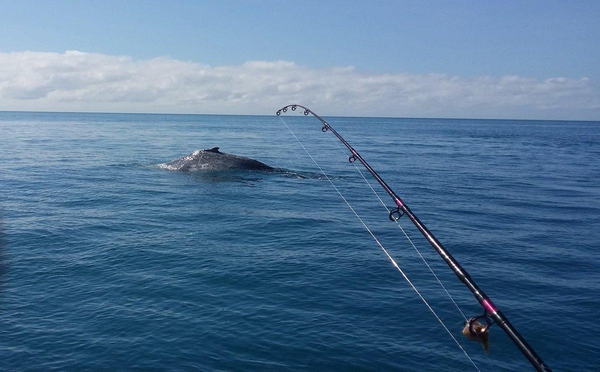 Baleia jubarte manda barco pelos ares e fere seis pescadores na Austrália