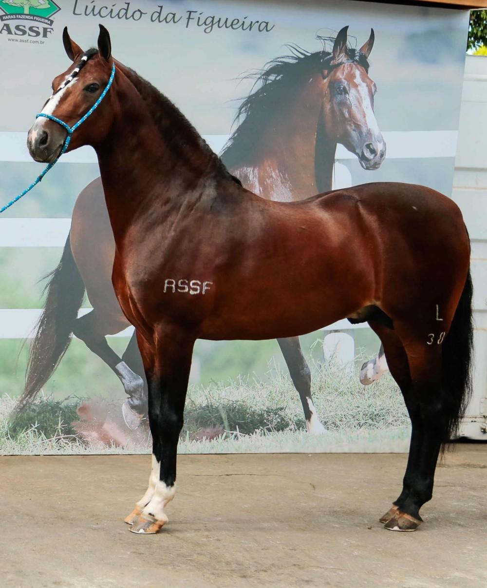 Cavalo que vale mais que uma Ferrari é destaque em exposição de Belo Horizonte