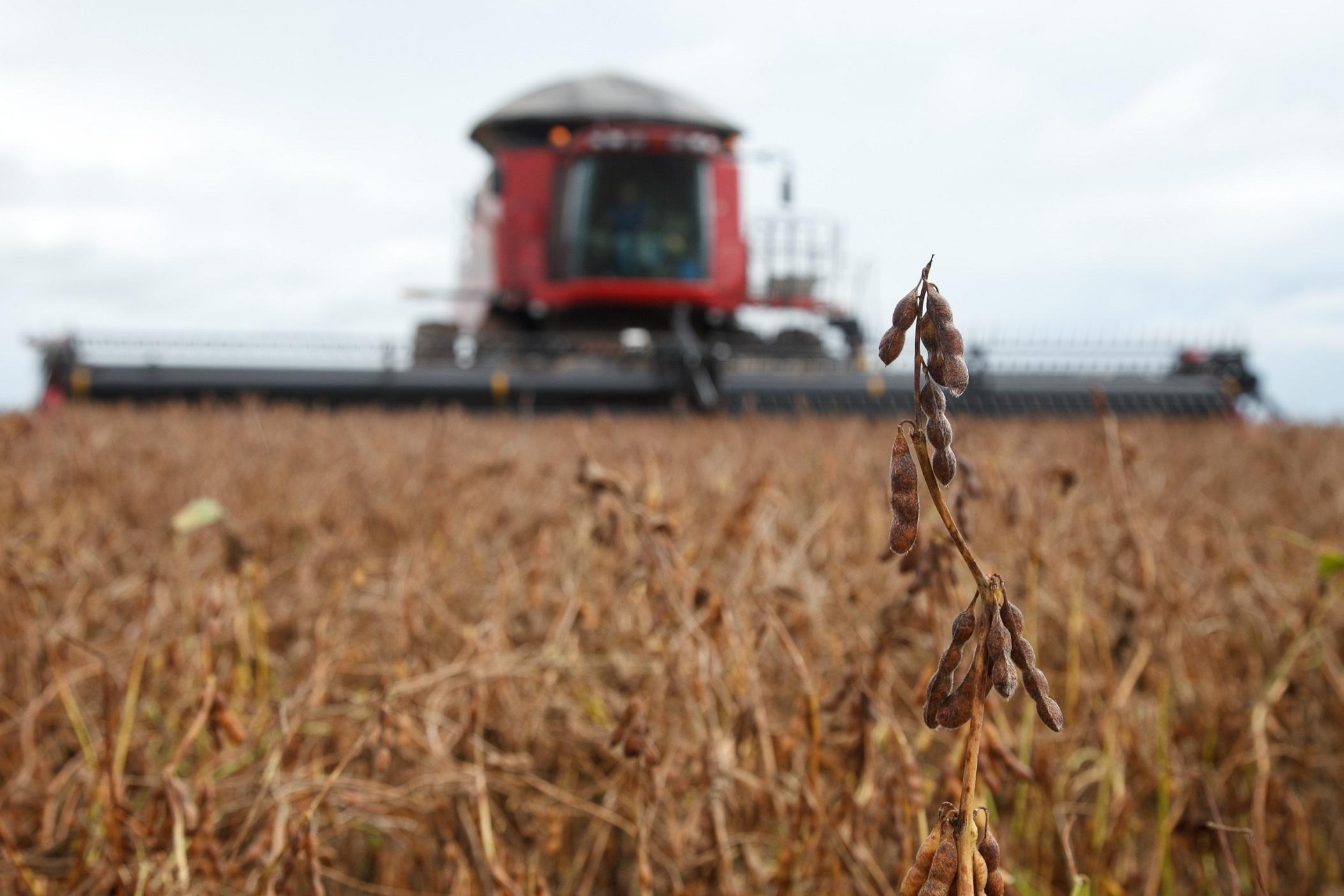 Agricultores estão atentos à adaptabilidade da soja ao clima de suas regiões para aumentar resultados
