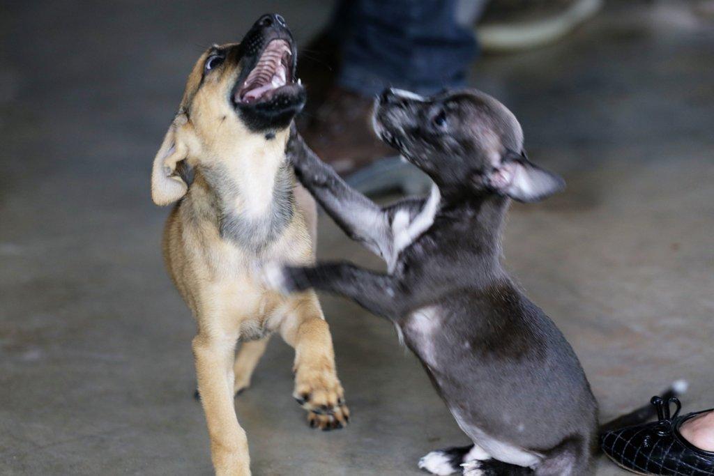 Lei municipal proíbe maus-tratos e crueldade contra animais