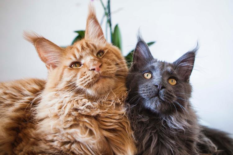 'Não há provas de transmissão de covid-19 por pets', diz veterinária