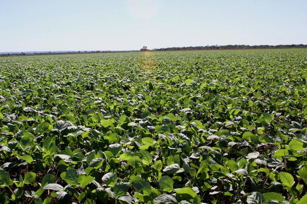 Plantio da soja está liberado no Tocantins a partir de 1º de outubro