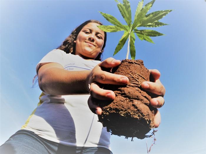Semana do Meio Ambiente em Araguaína começa na próxima semana e terá entrega de mudas drive-thru
