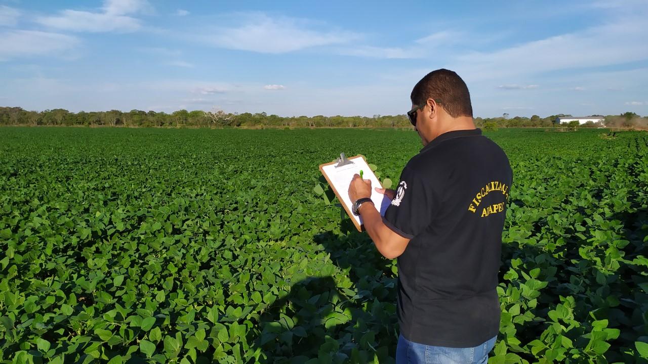 Adapec mantém controle da ferrugem asiática da soja e plantio cresce 6,3% nas várzeas tropicais