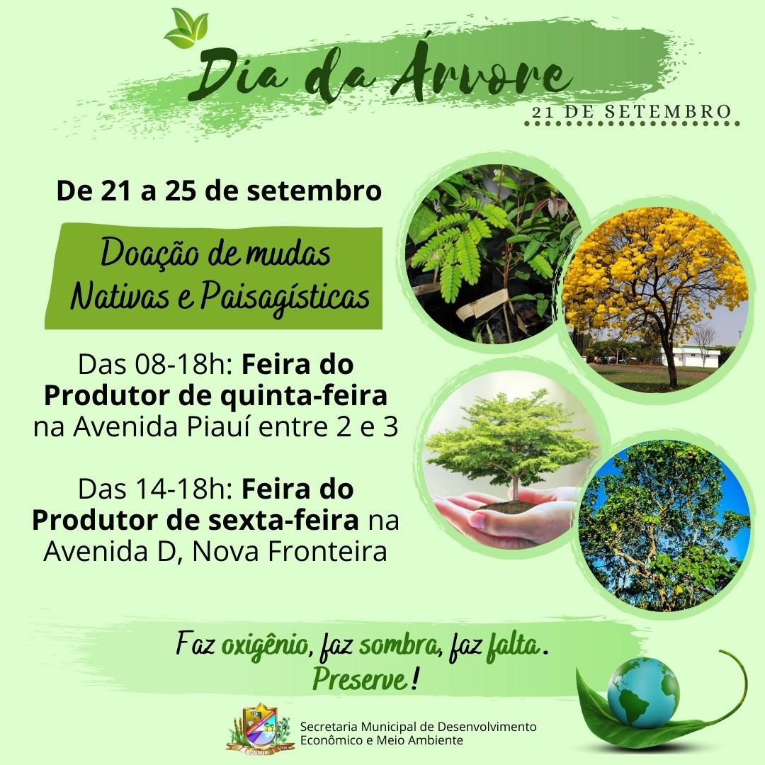 Mudas nativas serão distribuídas em alusão ao Dia da Árvore em Gurupi