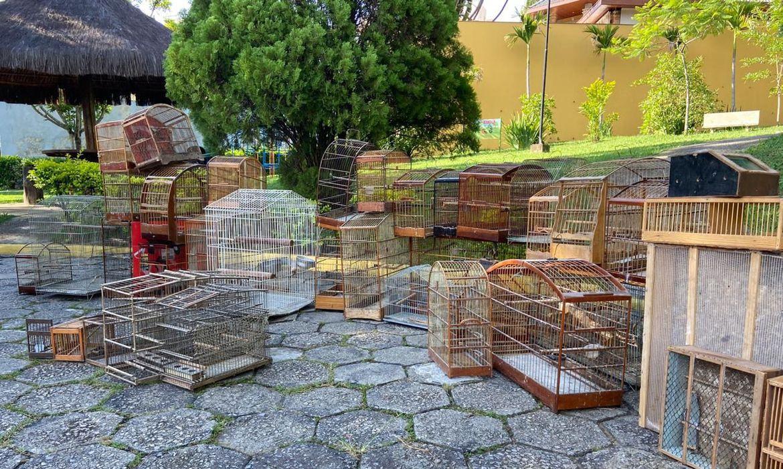 PF prende um dos principais suspeitos de tráfico de animais silvestres do País