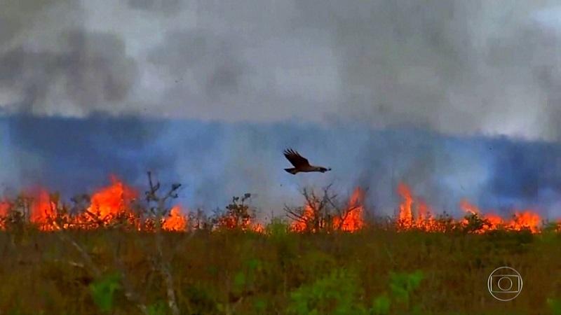 Conselho de Meio Ambiente acata manifestação do MPTO e mantém multa superior a R$ 1 milhão a empresa agrícola pela prática de incêndio