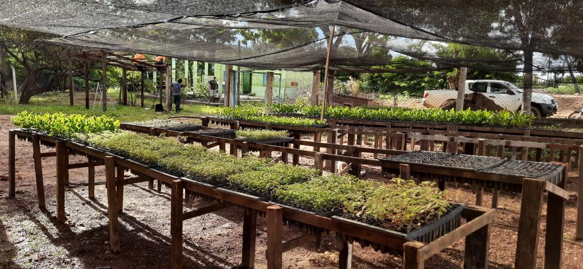 Viveiro da APA de Lajeado estima produzir 16 mil mudas este ano