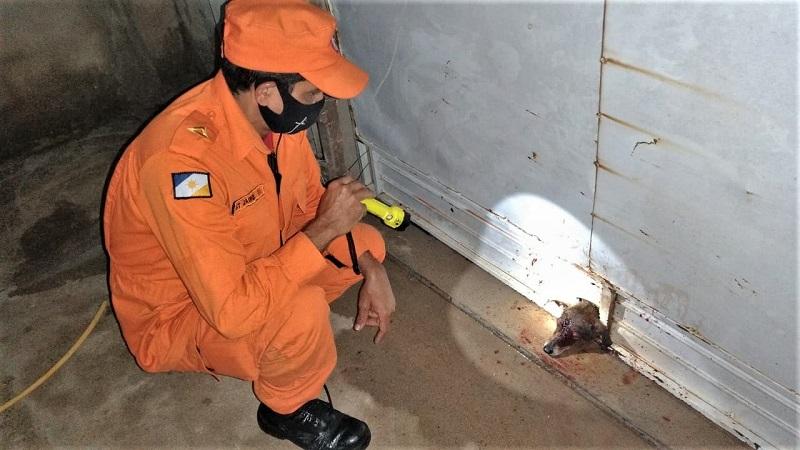 Preso no buraco do portão, cachorro é resgatado por bombeiros militares em Araguaína