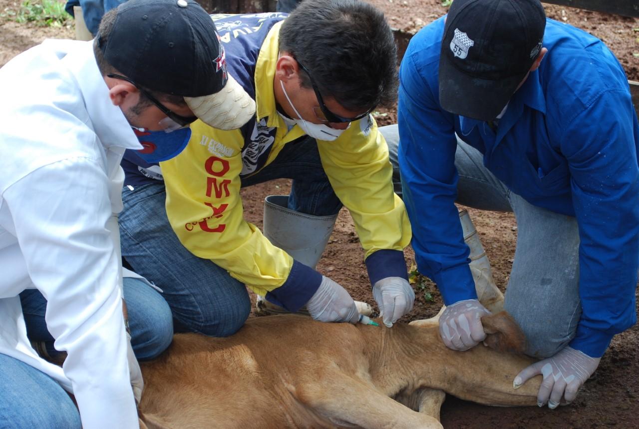 Produtor rural deve vacinar bovídeas de 3 a 8 meses contra brucelose até 30 de junho