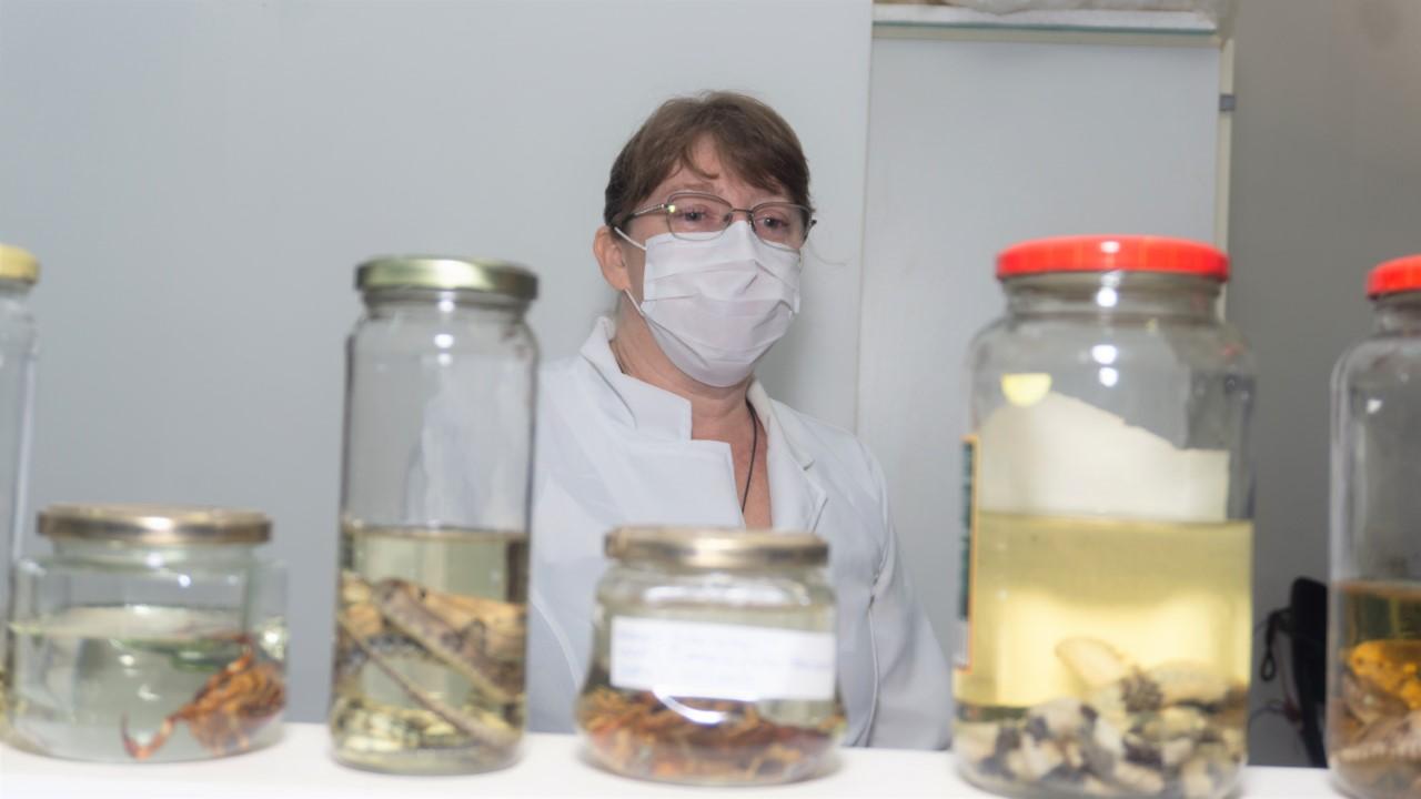Cientistas estudam meios para minimizar as sequelas dos acidentes com animais peçonhentos no Tocantins