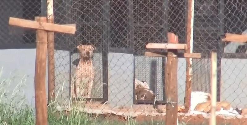 Mulher morre após ataque pitbulls em chácara no interior de SP