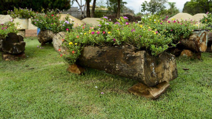 Manutenção de paisagismo garante beleza da Capital do Tocantins mesmo na estiagem