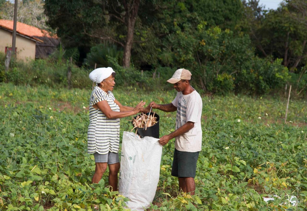 Governo do Tocantins reforça ações de desenvolvimento do cooperativismo na agricultura familiar