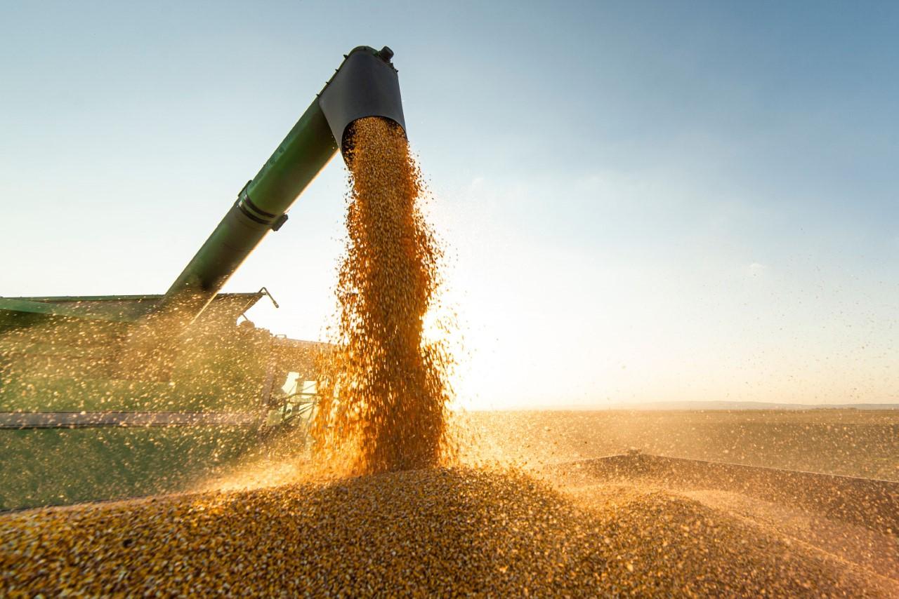 Agronegócio brasileiro bate recorde de receita com exportações, mas problemas persistem